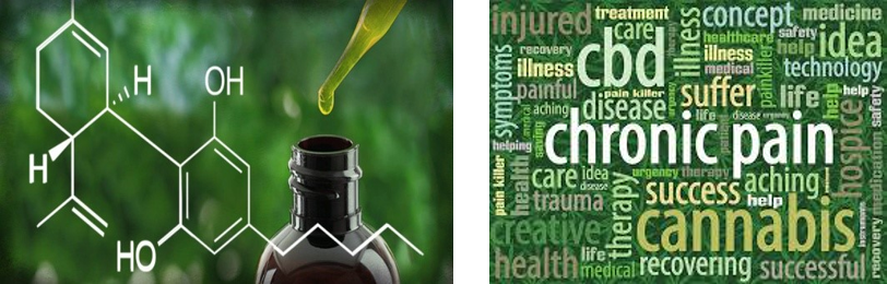 Be Part Of The CBD Hemp Oil New Product Line Revolution 1